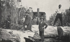 A blockage on the Marrawah Tramway. From the Weekly Courier, 13 October 1921, p.28.