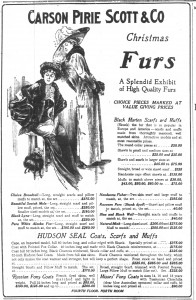In 1910 'Tasmanian Chinchilla (clear blue Australian possum)' took its place in the American fur catalogue alongside Hudson seal, skunk, beaver, wolf and chamois. Advert from the Chicago Daily Tribune, 17 December 1910, p.26