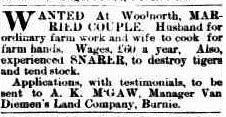 The tigerman job advertised, North Western Advocate and the Emu Bay Times, 22 May 1903, p.3.