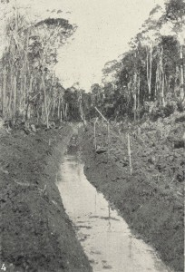 Another shot of Welcome Swamp drainage, a familiar scene on the dolomite swamps of Circular Head in the first half of the 20th century. From the Weekly Courier, 6 September 1923, p.21.